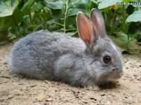 فروش پالتو پوست خرگوش